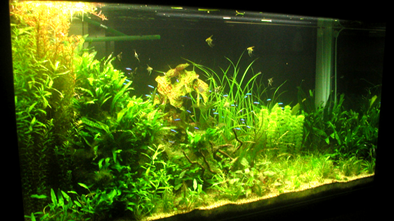 Planted Tank of mine